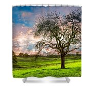 The Old Apple Tree At Dawn Shower Curtain