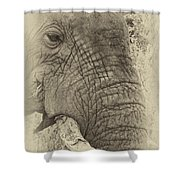 The Old Elephant Bull Shower Curtain