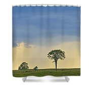 The Old Elm Shower Curtain