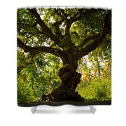 The Old Mango Tree Shower Curtain