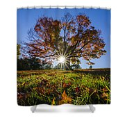 The Old Maple Shower Curtain