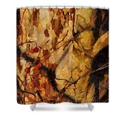 The Old Sycamore Tree Shower Curtain