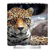 The Ole Leopard Don't Change His Spots Shower Curtain