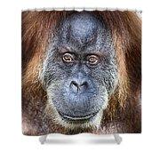 The Orangutan Album V4 Shower Curtain