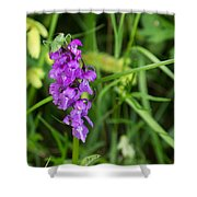 The Orchid And The Grasshopper  Shower Curtain