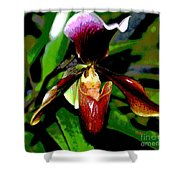 The Orchid Room Shower Curtain
