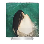 The Original Shamu Orca Whale At Sea World San Diego California 1967 Shower Curtain
