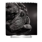 The Other Dog Next Door Shower Curtain by Bob Orsillo