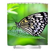 The Paper Kite Or Rice Paper Or Large Tree Nymph Butterfly Also Known As Idea Leuconoe 2 Shower Curtain
