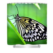 The Paper Kite Or Rice Paper Or Large Tree Nymph Butterfly Also Known As Idea Leuconoe Shower Curtain