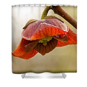 The Paw Paw Bloom Shower Curtain