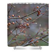 The Peaceful Fruit Of Nature Shower Curtain
