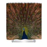 The Peacock 2 Shower Curtain
