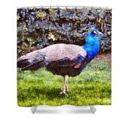 The Peacock Shower Curtain by Pixel  Chimp