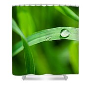 The Pearl - Featured 3 Shower Curtain