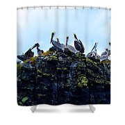 The Pelican Dance Shower Curtain
