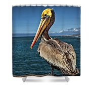 The Pelican Of Oceanside Pier Shower Curtain