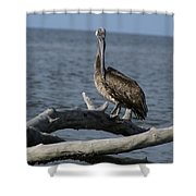 The Pelican Pose Shower Curtain
