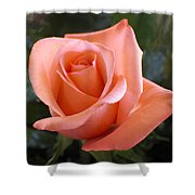 The Perfect Coral Rose Shower Curtain