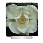 The Perfect Magnolia Bloom Shower Curtain