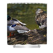 The Perfect Mallard Couple Shower Curtain
