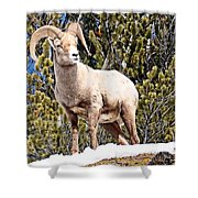 The Perfect Pose Shower Curtain