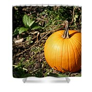 The Perfect Pumpkin In The Patch Shower Curtain
