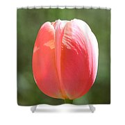 The Perfect Tulip Shower Curtain