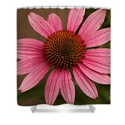 The Pink Daisy Shower Curtain