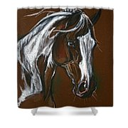 The Pinto Horse Shower Curtain