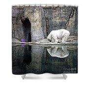 The Polar Bear And The Purple Chair Shower Curtain