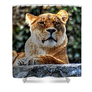 The Pondering Lioness Shower Curtain