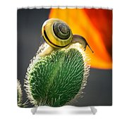 The Poppy And The Snail Shower Curtain