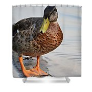 The Posing Duck Shower Curtain