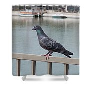The Posing Pigeon Shower Curtain