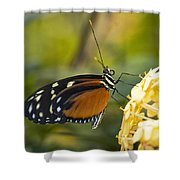 The Postman Butterfly  Shower Curtain