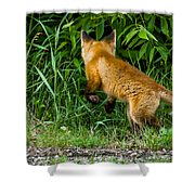 The Pounce Shower Curtain