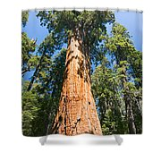 The President - Very Large And Old Sequoia Tree At Sequoia National Park. Shower Curtain