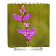 The Prettiest Pink Shower Curtain