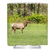The Proud Elk Shower Curtain