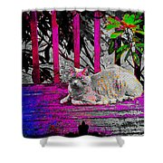 The Psychedelic Cat Shower Curtain