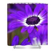 The Purple Daisy Shower Curtain