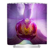 The Purple Orchid Shower Curtain