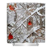 The Quiet Within The Forest Shower Curtain