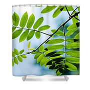 The Rain Has Stopped Shower Curtain