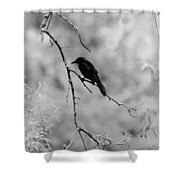 The Raven Shower Curtain