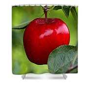 The Red Apple Shower Curtain