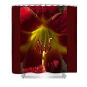 The Red Lily Shower Curtain