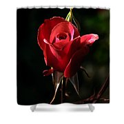 The Red Rode Bud Shower Curtain