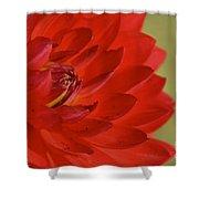 The Red Sun Dahlia Shower Curtain